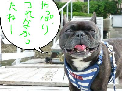 snap_myfrenchbulldog_20127495512.jpg