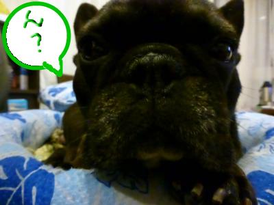 snap_myfrenchbulldog_201276194924.jpg