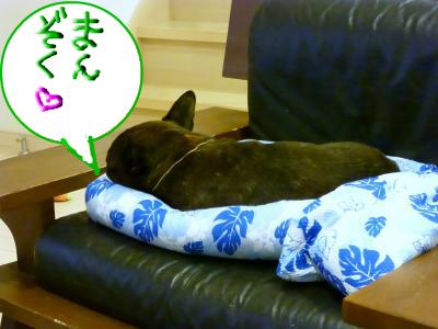 snap_myfrenchbulldog_201276195753.jpg