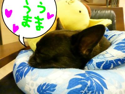 snap_myfrenchbulldog_20128475050.jpg