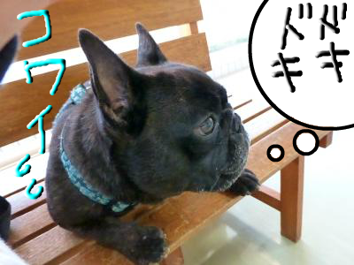 snap_myfrenchbulldog_201285205238.jpg