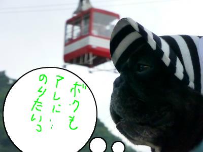 snap_myfrenchbulldog_201286213128.jpg