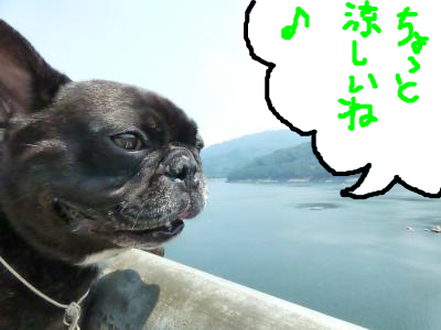 snap_myfrenchbulldog_20128621956.jpg