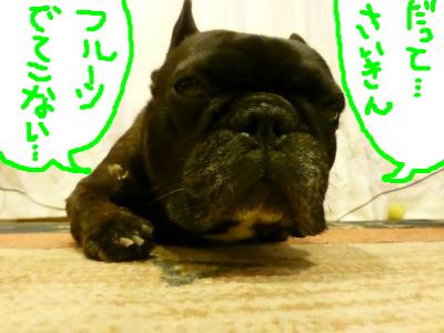 snap_myfrenchbulldog_20129520320.jpg