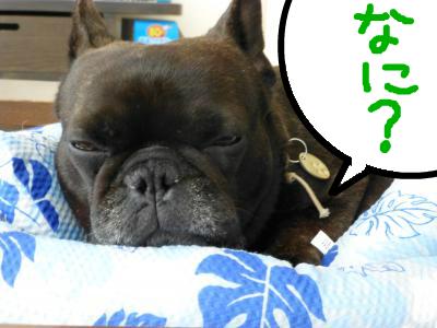 snap_myfrenchbulldog_201296201014.jpg