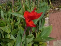 tntnH22-09-22栗町の花 (1)_