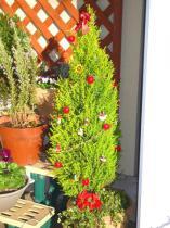 tntnH22-12-23クリスマスツリー (3)