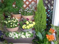 tntnH23-04-26玄関先の花 (3)
