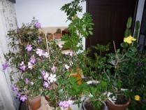 tntnH23-12-24部屋の草花