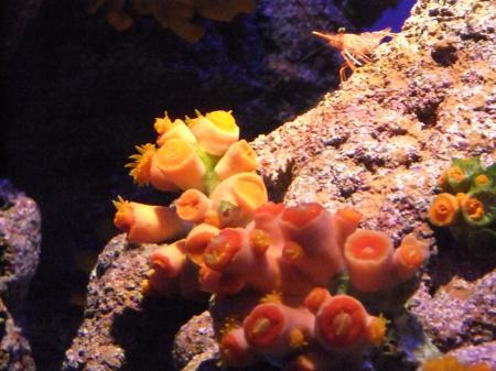水族館(3)