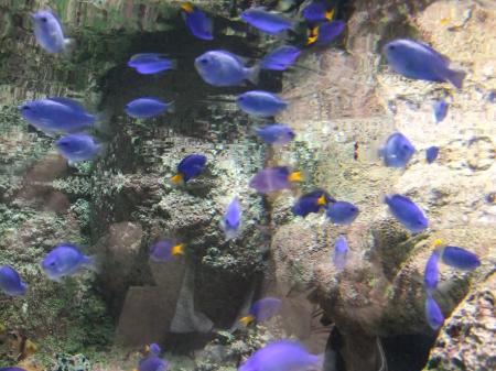 水族館(4)