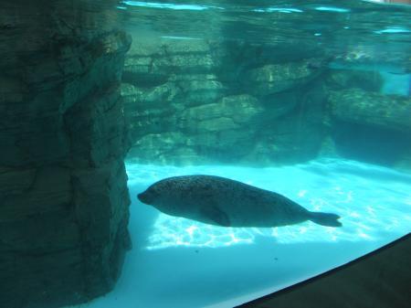 水族館(10)