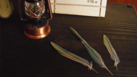 ウタちゃんの羽根(1)