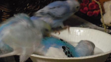 水浴び(3)