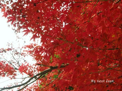 紅葉(1)