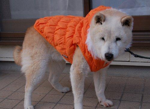 non orange