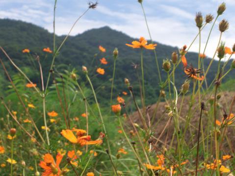 20120902山の辺の道2566