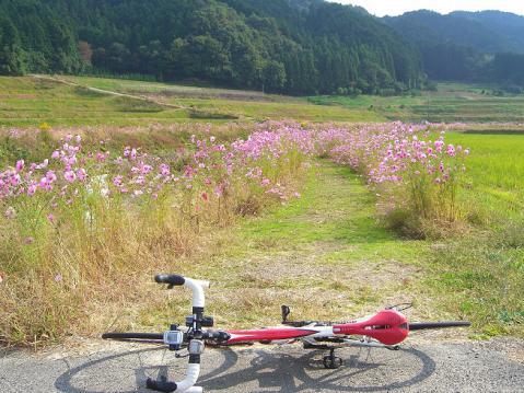 20121027天ダム柳生奈良競輪2644