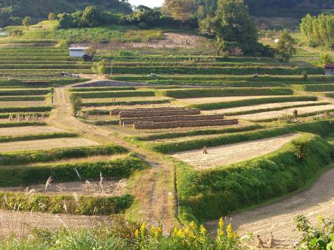20121103明日香ポタ2676