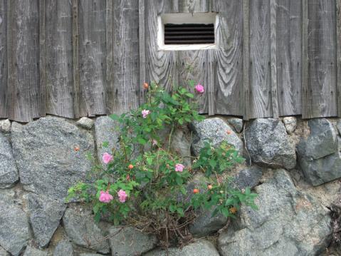 20121103明日香ポタ2672