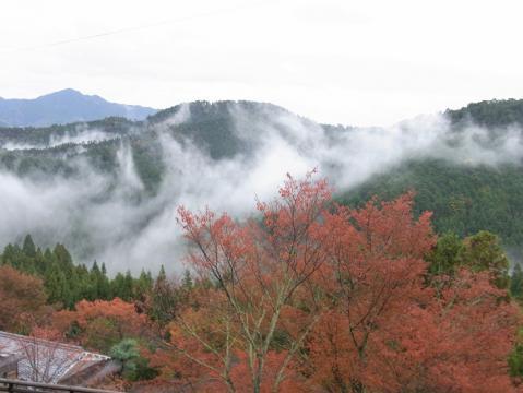 20121111吉野山0830