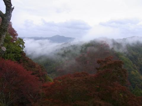 20121111吉野山0815