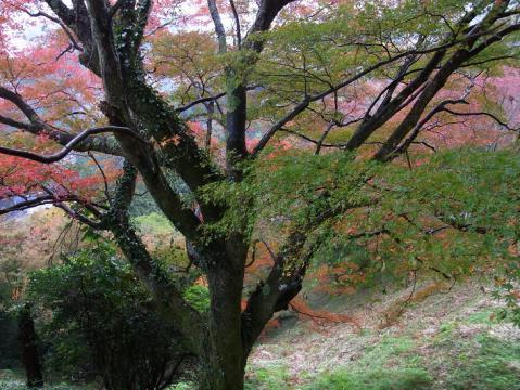 20121111吉野山0812