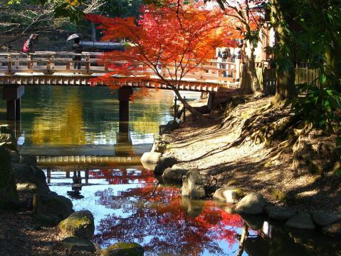 20121125奈良公園紅葉2713