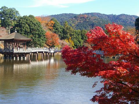 20121125奈良公園紅葉2715