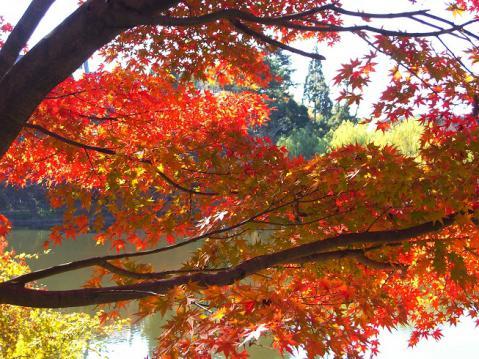 20121125奈良公園紅葉2717