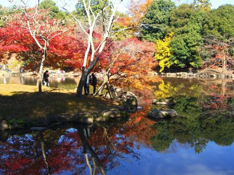 20121125奈良公園紅葉2710