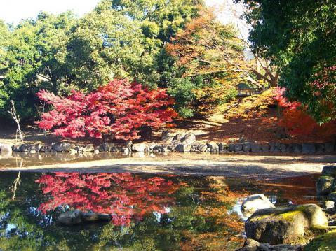 20121125奈良公園紅葉2709