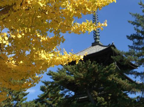 20121125奈良公園紅葉2707