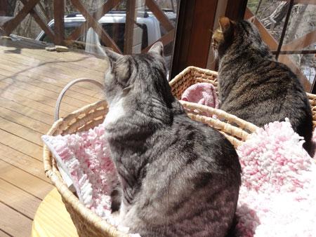 窓辺のナナとマロン2