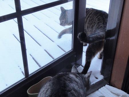 春の淡雪4