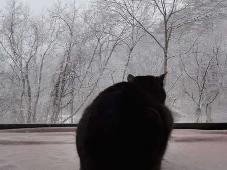 久しぶりの雪2