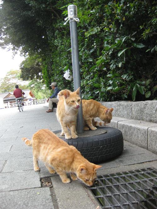 おかげ猫09