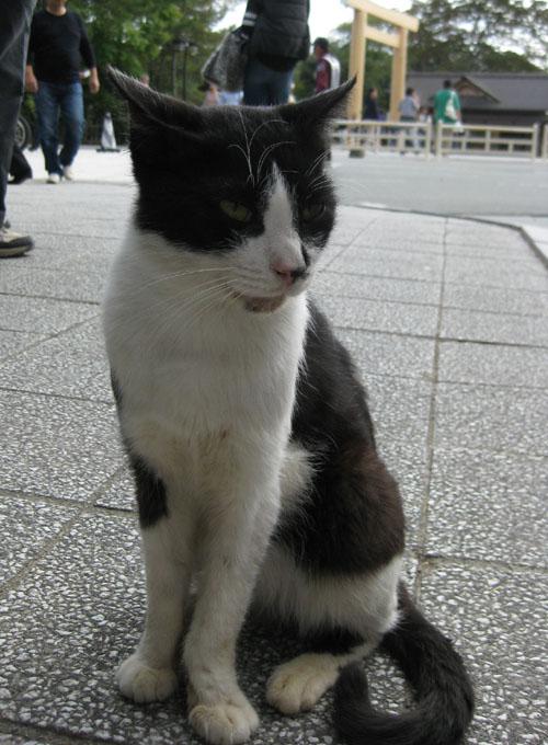 おかげ猫03
