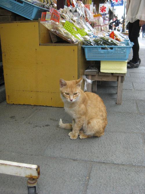 おかげ猫04