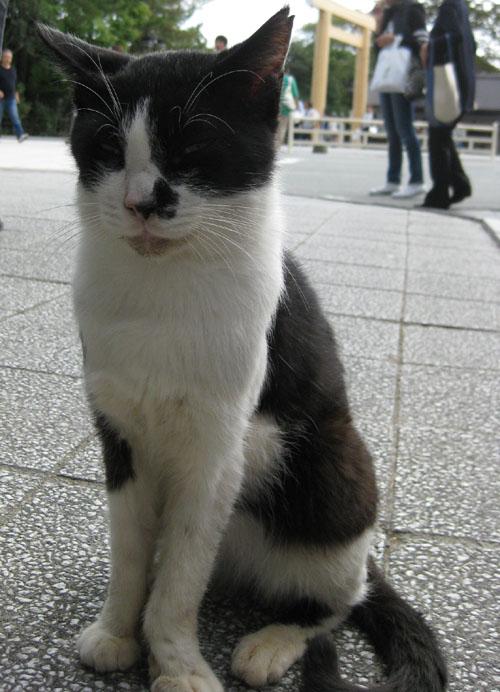 おかげ猫02