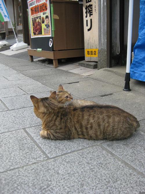 おかげ猫12