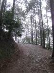 日吉・金大巌への山道10