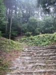 日吉・金大巌への山道09