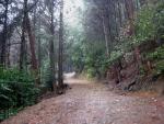 日吉・金大巌への山道11