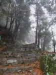 日吉・金大巌への山道19
