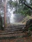 日吉・金大巌への山道17