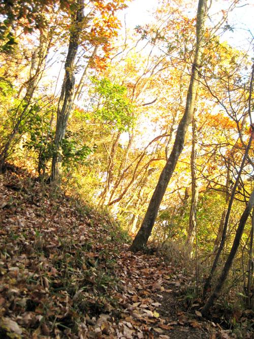 秋の山01