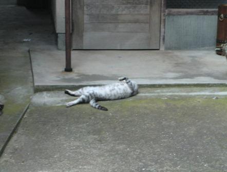 猫寝ます夏3