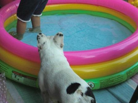 魅惑のプール