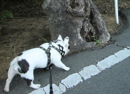 巨木こわい
